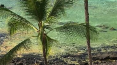 Palm Trees — Video Stock