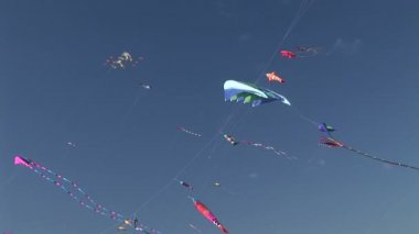 Kites Flying — Stock Video