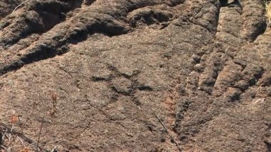 Petroglyph carved into lava rock — Stock Video