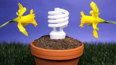 Energy saving light bulb planted — Stock Video