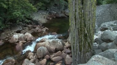Tree and boulders along the Merced River — Stock Video
