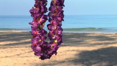 Lei in tree — Stock Video