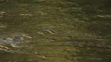 Merced River, Yosemite National Park — Stock Video