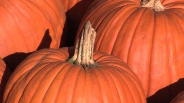 Pumpkins — Stock Video