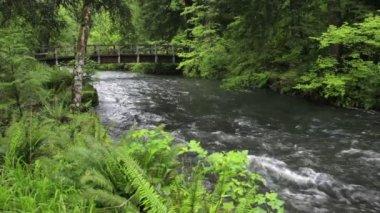 Bridge over Silver Creek — Stock Video
