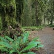 Stock Video: Trail through Hall of Mosses