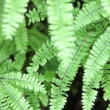 Ferns — Stock Video