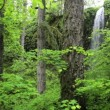 Stock Video: Ferns and Redwoods