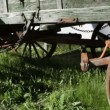 Old Wagon Wheels — Stock Video