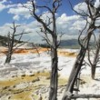 Mammoth Hot Springs — Stockvideo