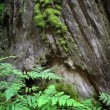 Stok video: Ferns and Redwoods