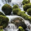 ストックビデオ: Moss covered rocks in UmpquRiver