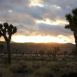 Joshua Tree, time lapse — Stock Video