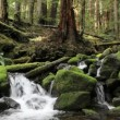 Olympic National Park river — Stock Video