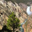 Yellowstone River — Stockvideo