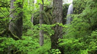 папоротники и секвойи — Стоковое видео