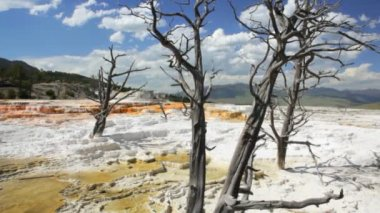 Mammoth Hot Springs — Wideo stockowe