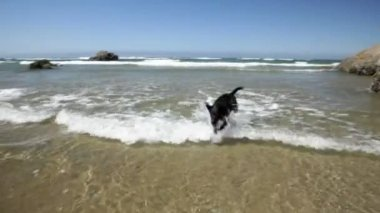 Dog at the beach montage — Stockvideo