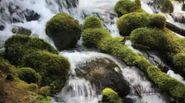 Moss covered rocks in Umpqua River — Stock video