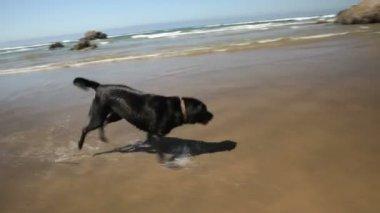 Hund på stranden montage — Stockvideo