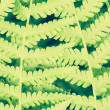 Fern Leaf, Close Up — Stock Photo #38306097