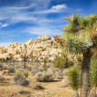 JoshuTree National Park — Stock Photo #38423593