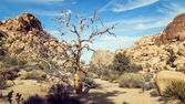 Barren Tree — Stock Photo