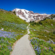 Trail to Mount Rainier — Stock Photo #40503745