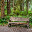 Empty Log Bench in the Forest — Stock Photo