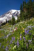 Mount Rainier and WIldflowers — Stock Photo