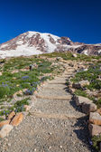 Hiking Trail to Mount Rainier — Stock Photo