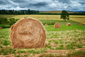 Round Hay Bale — Stock Photo