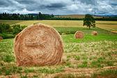 Round Hay Bale — Stock Photo