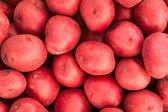 Raw Red Potatoes — Stock Photo