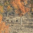 Whitetail Deer Bucks — Stock Video #13676683