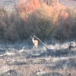 Whitetail Deer Buck — Stock Video #13678539