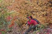 Fall Foliage Photography — Stock Photo