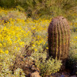 Spring Wildflowers in the Desert — Stockfoto