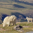 Stock Photo: Mountain Goat Nanny and Kid