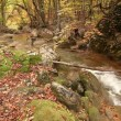 Boulder which has acquired a moss, and the mountain river — Vidéo