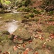 Coast of the mountain river close up — Stock Video #32447975
