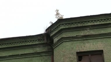 Roof of the old house with a tree — Vídeo de stock