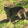 Vídeo Stock: Two adult cats play on street
