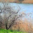 Stock Video: River landscape with a cane and birds