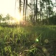 Stock Video: Sunny morning in wood. Slow motion