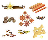 Collection of Spices — Stock Vector
