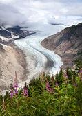 Lachs-gletscher — Stockfoto