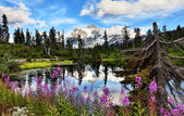Highwood Lake — Stock Photo