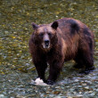 Grizzly bear — Stock Photo #22025351