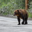 Grizzly bear — Stock Photo #22025453